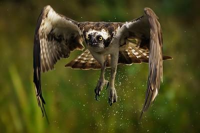 Osprey and Raptor 2021,  3 day masterclass