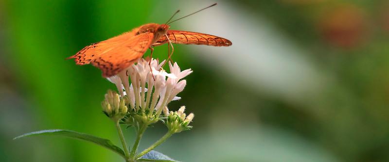 090620 KL Butterfly Park 06