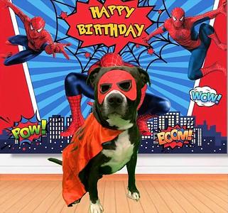 Dante's fourth birthday!