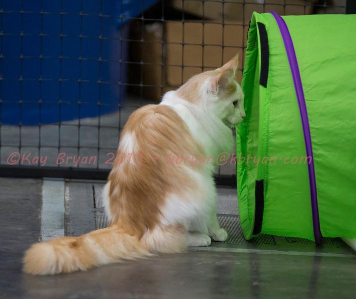 CatShow2014165.jpg