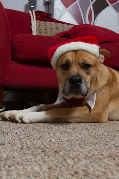 Oatman 2012 Christmas