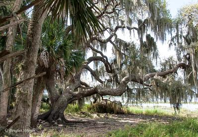 Florida Trip - March 2015