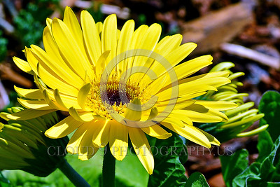 Unknown Name Flower Pictures 14