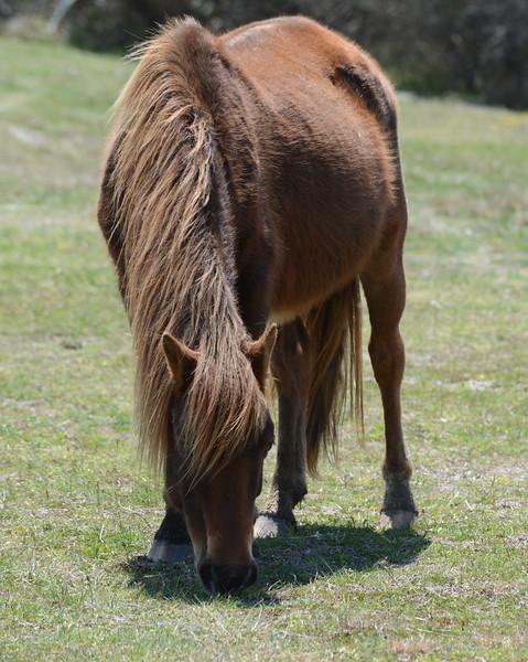 Horse 05_01_18.JPG