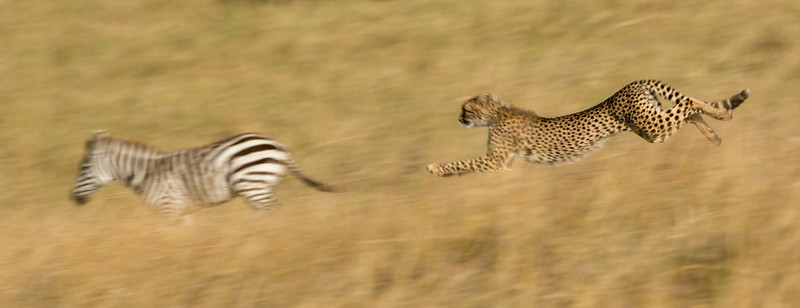 Best of Kenya 2013