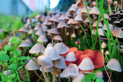 Pilze im November