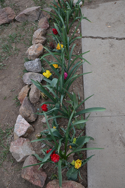 this was the first year these bloomed, I was so excited