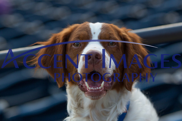 August 6-Bark in the Park!