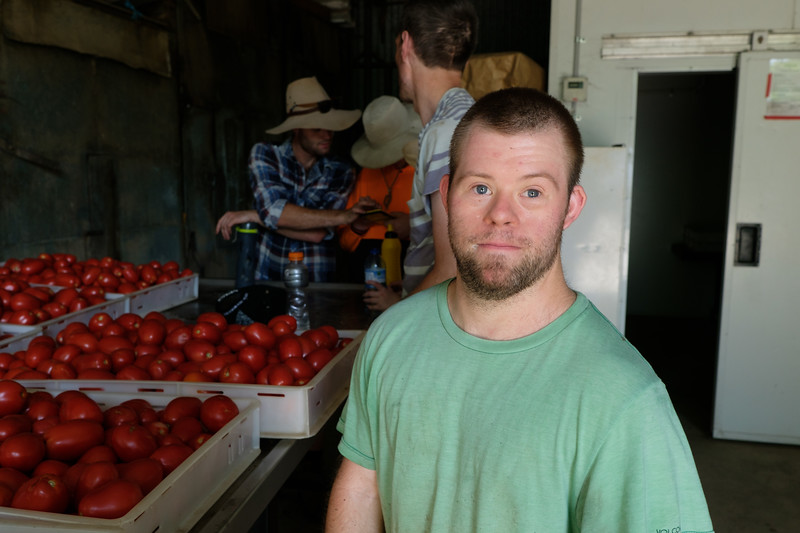 Man in a Tomato Farm Shed with Workmates