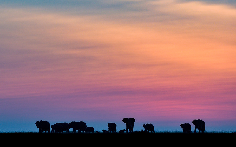 Morning-Blue-hour-elephants-masaimara.jpg
