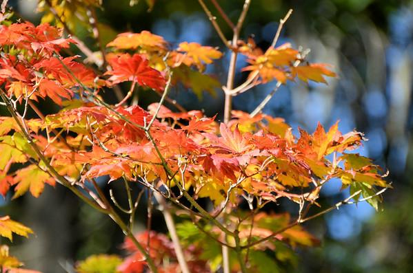 Autumn comes to Edwards Gardens (September 2014)