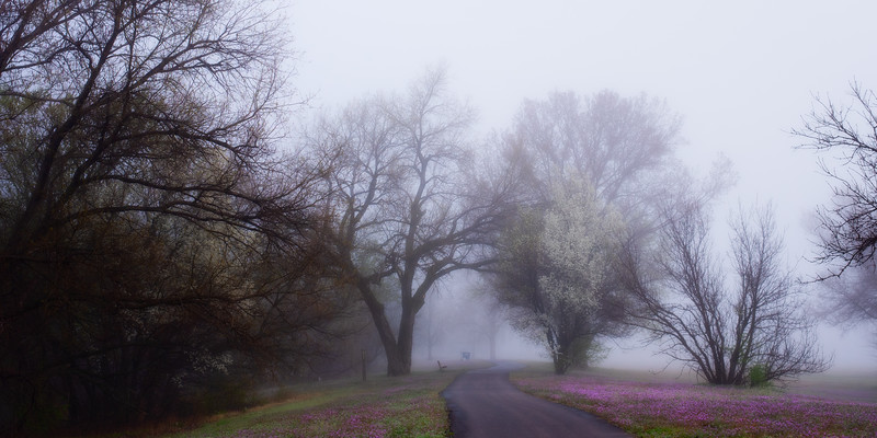 Fog~Sedgwick County Park April 2019