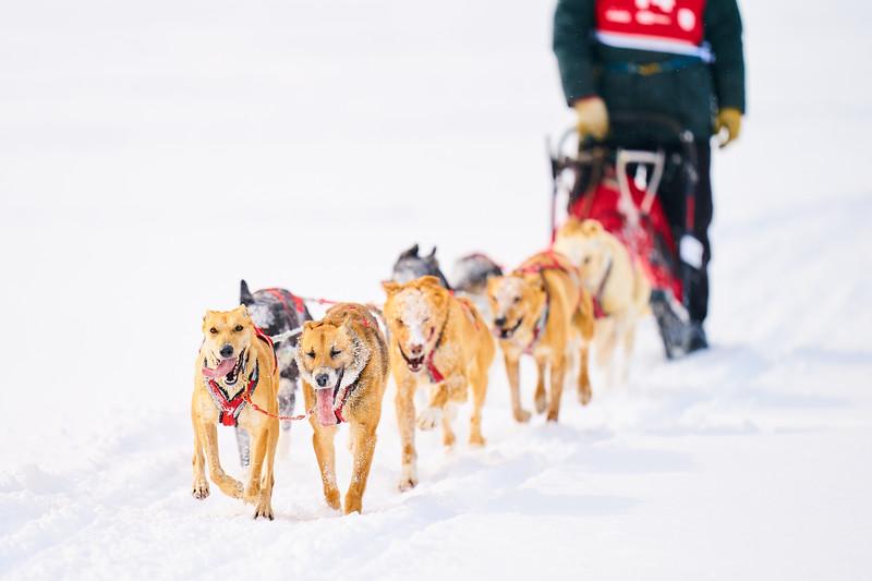 403    RobertEvansImagery.com IG @RobertEvansImagery   Klondike Dog Sled Race 2-9-2020.JPG