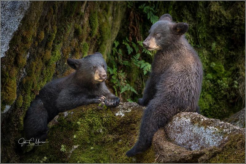 J85_6495 cubs watching mom L W.jpg