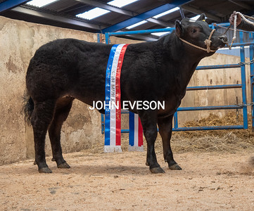 Barnard Castle Stores & Show Potential Cattle February 2019