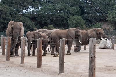 Dec. 29, 2013 - West Coast Trip - Washing and Feeding an Elephant