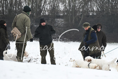 The Working Minority Breeds Spaniel Club cold game day 02.02.19