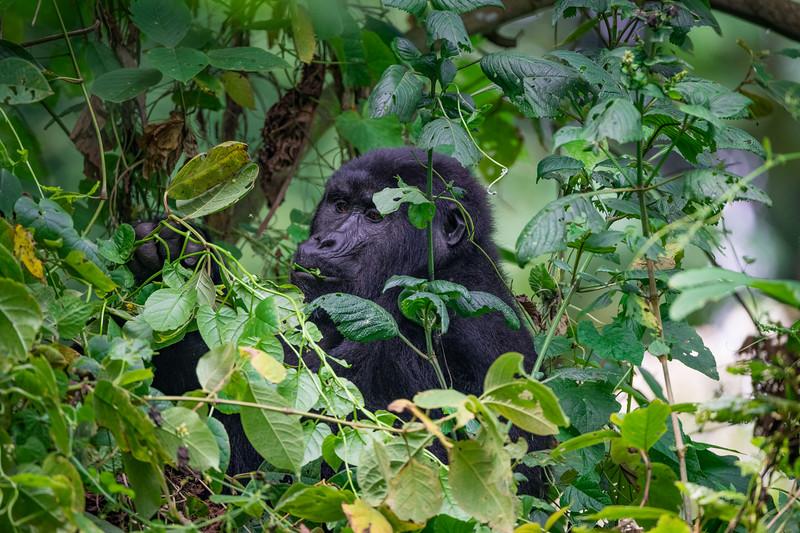 Uganda_T_Gor-2174.jpg