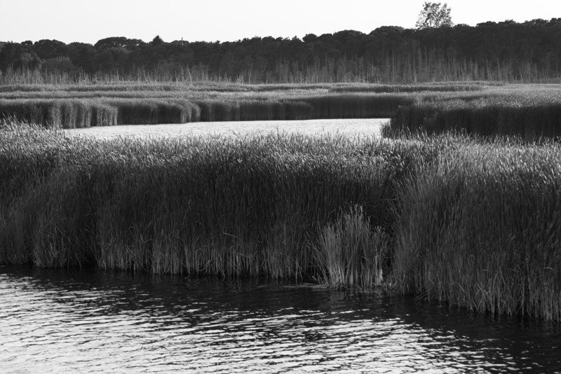 Tall Cape Grass.jpg