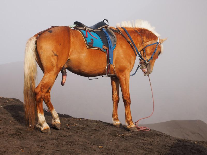 P4166968-horse-waiting.JPG