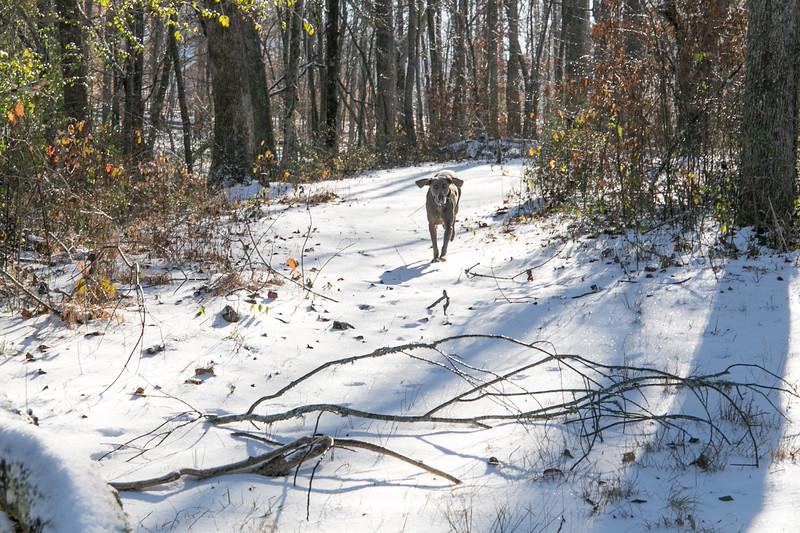 January Snow-22.jpg