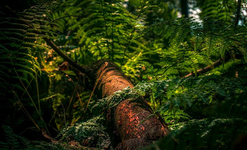 Forest Shadows-123.jpg