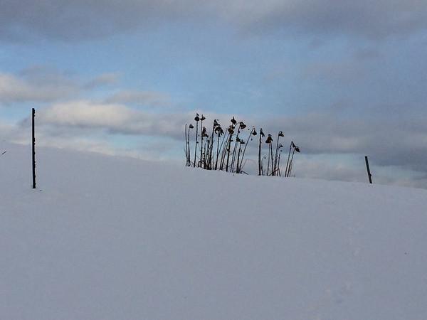 Winter Photo Contest, 2014