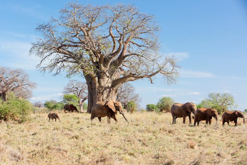 Africa - 102016 - 7899.jpg