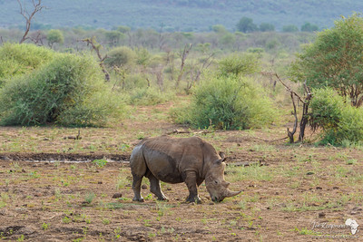 Africa and Rhinos