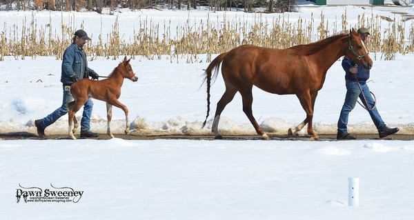 tinker adn foal first day out