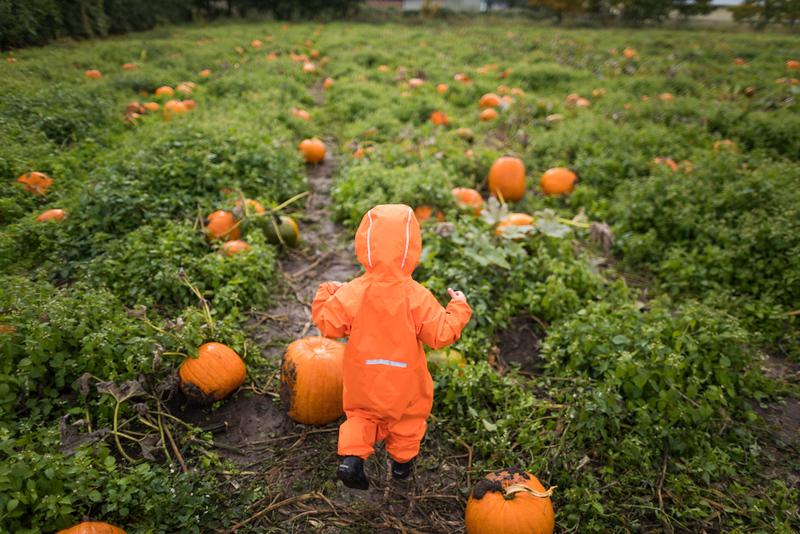 CIK-181007-apples and pumpkins-API_5843.jpg