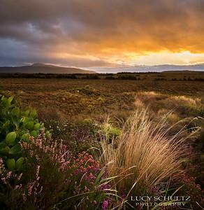 New Zealand 2 - North Island