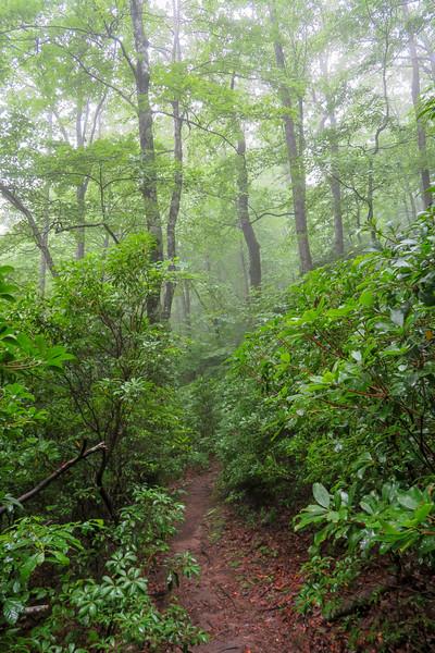 Mountains-to-Sea Trail -- 3,790'
