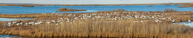 2021-Week 02 - Forsythe Wildlife Refuge.jpg