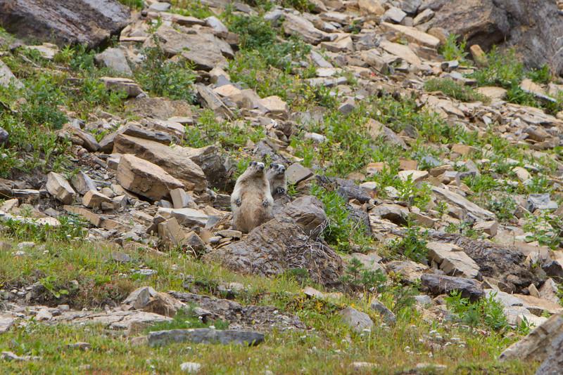 01_Glacier National Park_Montana-74.jpg