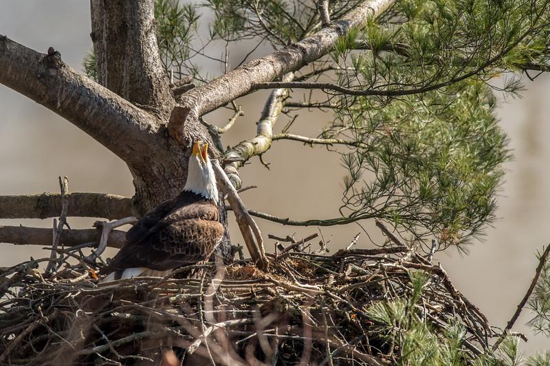 ulster-eagle-54.jpg