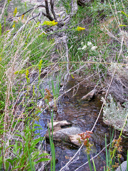 Creek above falls