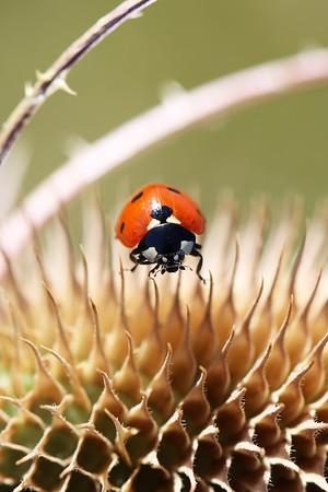 Beetles & Weevils (Coleoptera)