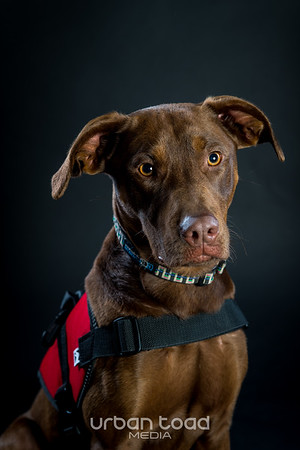 Service Dogs for America
