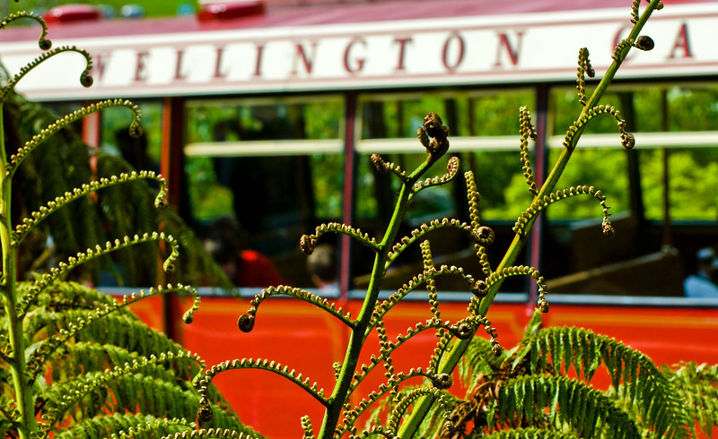 Native ferns and the cable car in Wellington City the capital of New Zealand.