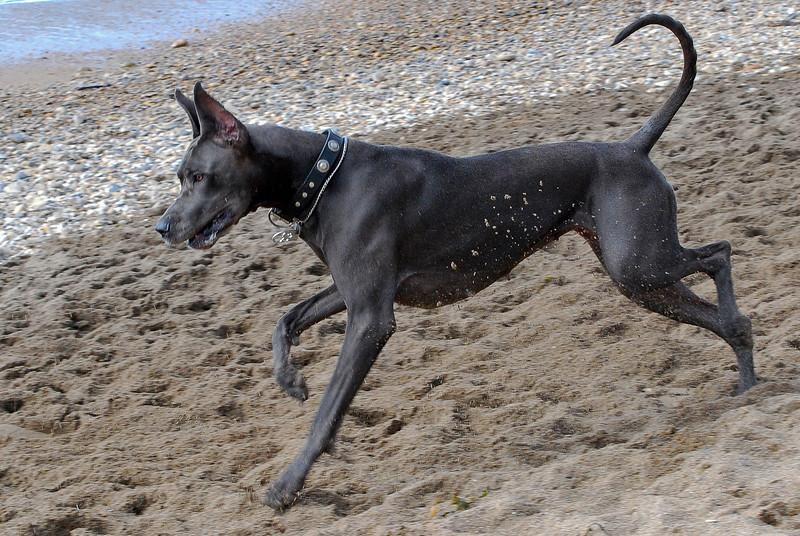 dogs_beach-050.jpg