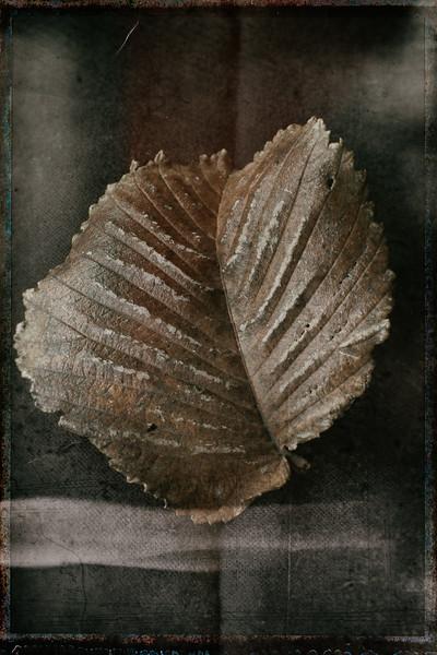 Leaf 5-.jpg
