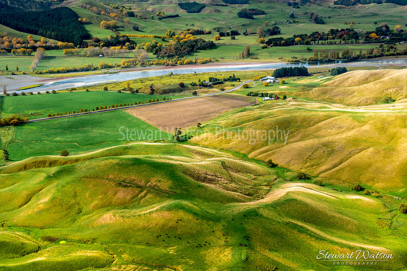 Herd of cows grazing the lush green slopes under Te Mata Peak