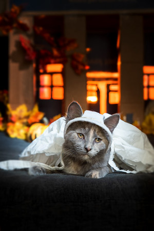 Halloween kittens