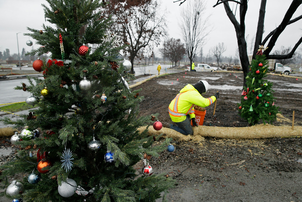 . Framed between a pair of Christmas trees a worker secures a roll of wattle for erosion control in the wildfire damaged Coffey Park neighborhood, Monday, Jan. 8, 2018, in Santa Rosa, Calif. Storms brought rain to California on Monday and increased the risk of mudslides in fire-ravaged communities in devastated northern wine country and authorities to order evacuations farther south for towns below hillsides burned by the state\'s largest-ever wildfire. (AP Photo/Eric Risberg)
