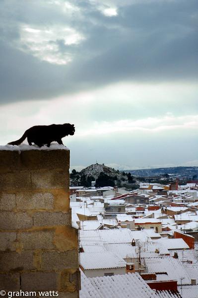 20050301-3_Chella_cat_snowy_wall.jpg