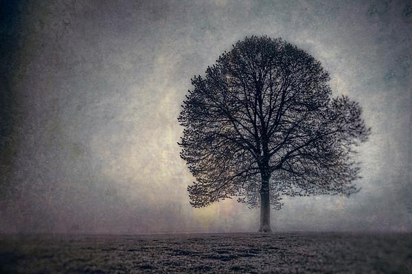 Tree of Life - $8