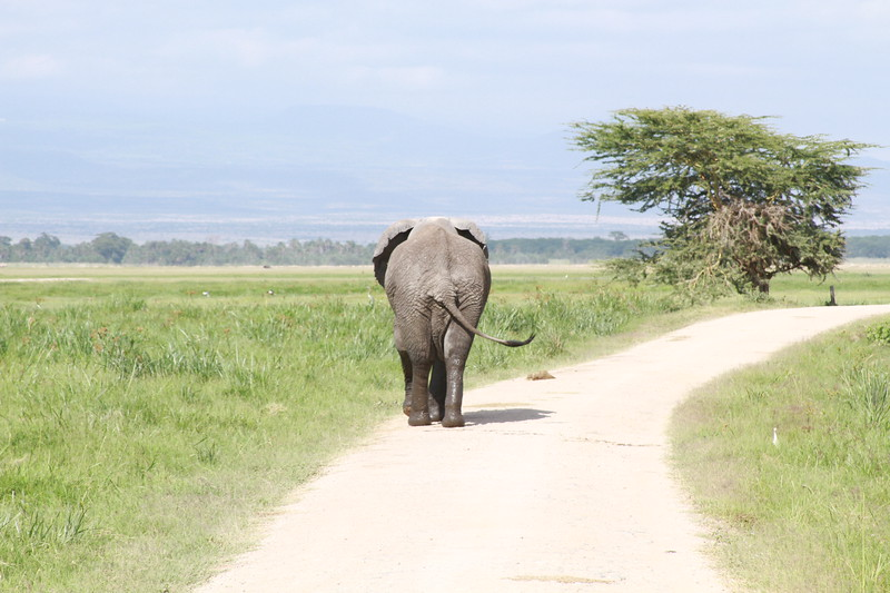 Kenya 2019 #2 869.JPG
