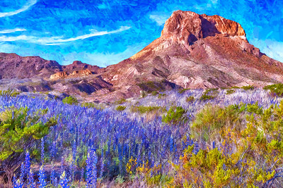 Field of blue bonnets in Big Bend