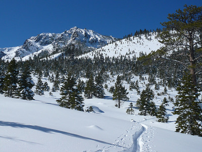 Seven days, seven feet, sunshine - Mt Tallac March 7